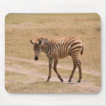 Baby Zebra Mouse Pads