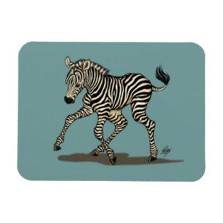 Baby zebra on blue background magnet