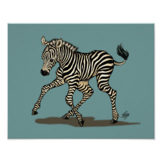 Baby zebra on blue background poster
