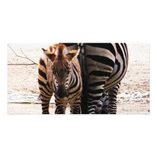 Baby Zebra Custom Photo Card