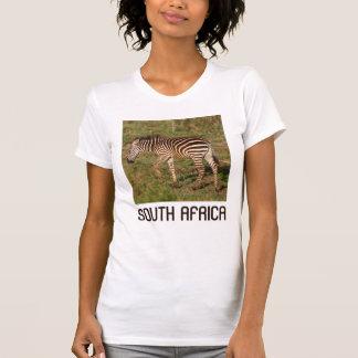 Baby Zebra walking, South Africa T-Shirt