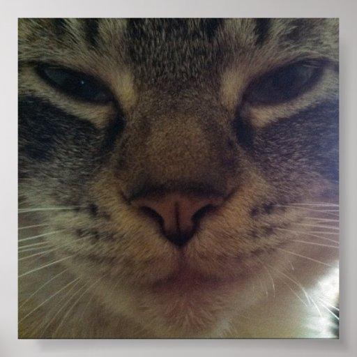 Babycat Close-Up Poster