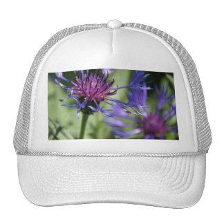 Bachelor Button Plant Baseball Hat