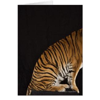Back end of tiger sitting on platform cards