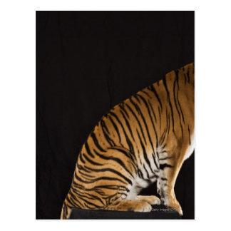 Back end of tiger sitting on platform postcard