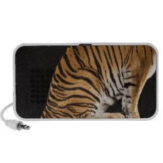 Back end of tiger sitting on platform laptop speaker
