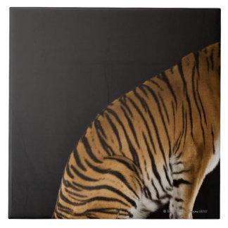 Back end of tiger sitting on platform tile