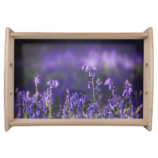 Back lit Bluebell Natural Tray