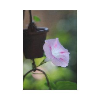 Back lit Flower Canvas Print
