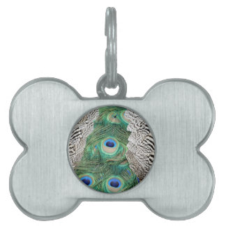 Back Of A Peacock Os om Colors Pet Tag