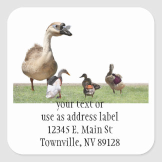 Back to School Ducks with Backpacks Sticker