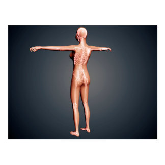 Back View Of Female Body With Skeletal System Postcard
