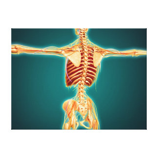 Back View Of Human Skeleton With Nervous System Canvas Print