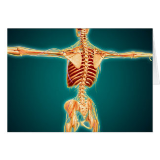 Back View Of Human Skeleton With Nervous System Greeting Card