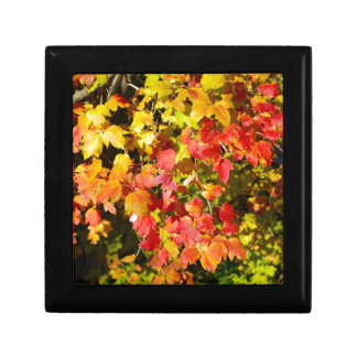 Background of bright red and yellow maple leaves small square gift box