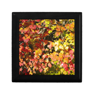 Background of bright red maple leaves small square gift box