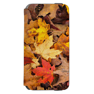 Background Of Colorful Autumn Leaves On Forest Incipio Watson™ iPhone 6 Wallet Case