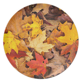 Background Of Colorful Autumn Leaves On Forest Plate