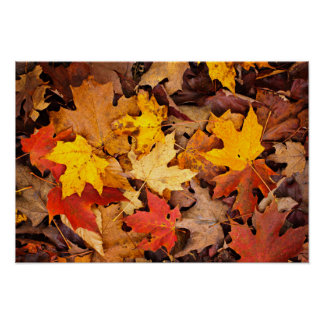 Background Of Colorful Autumn Leaves On Forest Poster
