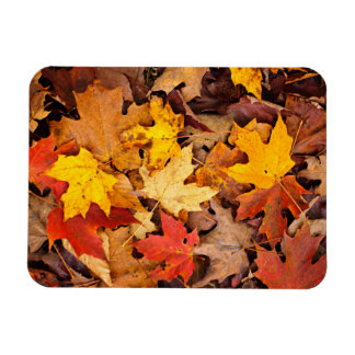 Background Of Colorful Autumn Leaves On Forest Rectangular Photo Magnet
