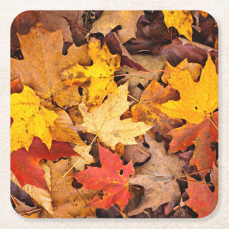 Background Of Colorful Autumn Leaves On Forest Square Paper Coaster