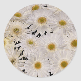 Background of daisy flowers round sticker