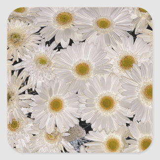 Background of daisy flowers square sticker