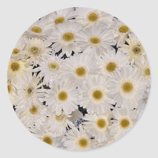 Background of daisy flowers round sticker