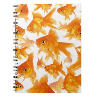 Background Showing a Large Group of Goldfish Notebook