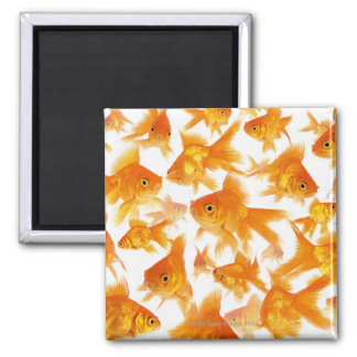 Background Showing a Large Group of Goldfish Square Magnet