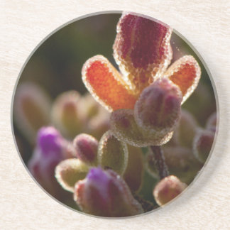 Backlit Colorful Succulent Flower Bud With Rim Coaster
