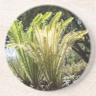 Backlit palms coaster