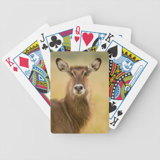 Backlit Portrait Of Female Defassas Waterbuck Bicycle Playing Cards