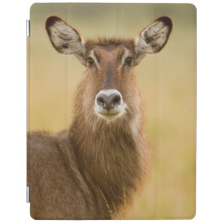 Backlit Portrait Of Female Defassas Waterbuck iPad Cover