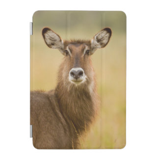 Backlit Portrait Of Female Defassas Waterbuck iPad Mini Cover