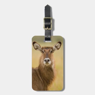 Backlit Portrait Of Female Defassas Waterbuck Luggage Tag