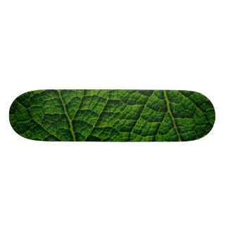 Backlit skunk cabbage leaf texture skateboards