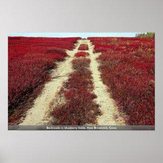 Backroads in blueberry fields, New Brunswick, Cana Print