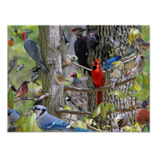 Backyard Bird Poster
