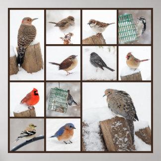 Backyard Birds in Snow Poster