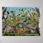 Backyard Birds of Indiana Poster