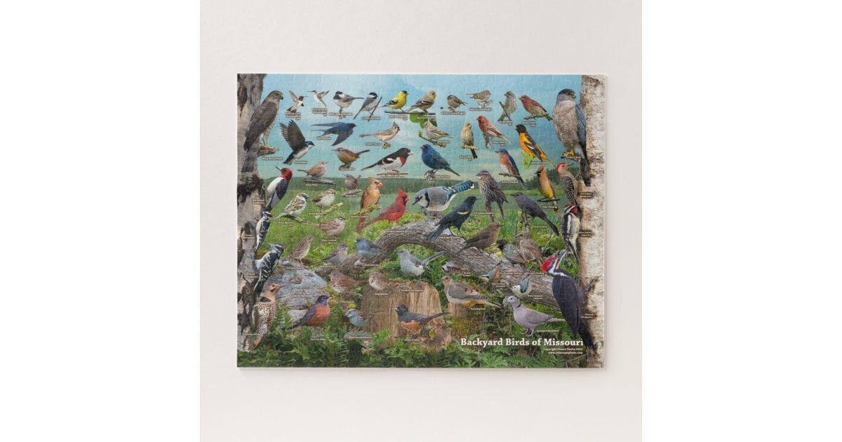 Backyard Birds of Missouri Jigsaw Puzzle | Zazzle.co.uk