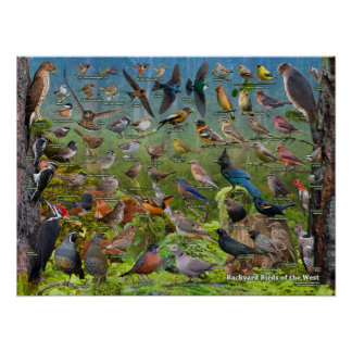 Backyard Birds of the West Poster