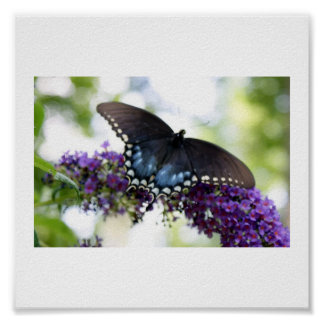 Backyard Butterfly Print
