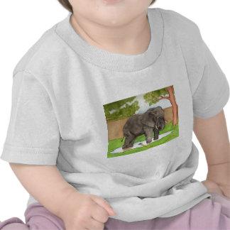 Backyard Elephant T Shirts