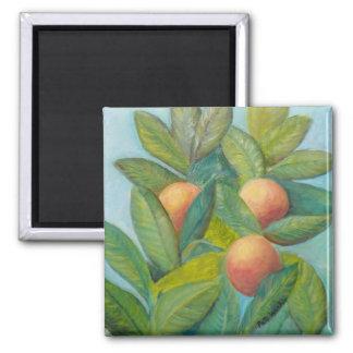 BACKYARD FLORIDA ORANGES Magnet 2 Inch Square Magnet