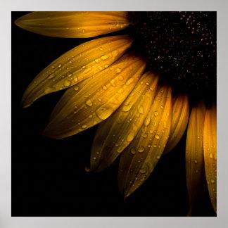 Backyard Flowers 28 Sunflower Poster
