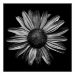 Backyard Flowers In Black And White 18 Poster