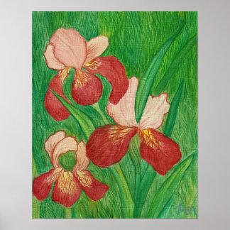 Backyard Iris Print
