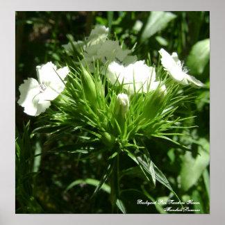 Backyard Pics, Random Flower Poster